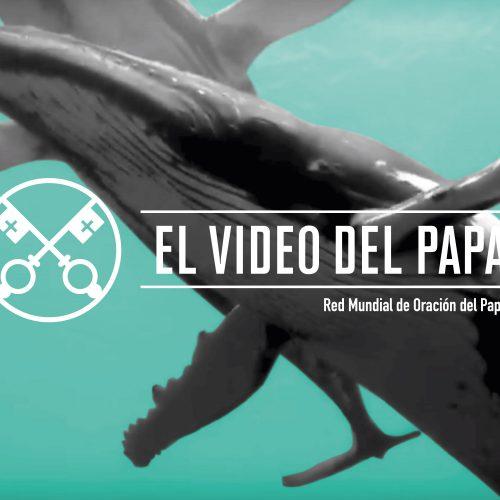 EL VIDEO DEL PAPA: La protección de los océanos