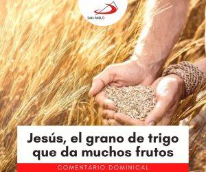 COMENTARIO DOMINICAL: Jesús, el grano de trigo que da muchos frutos