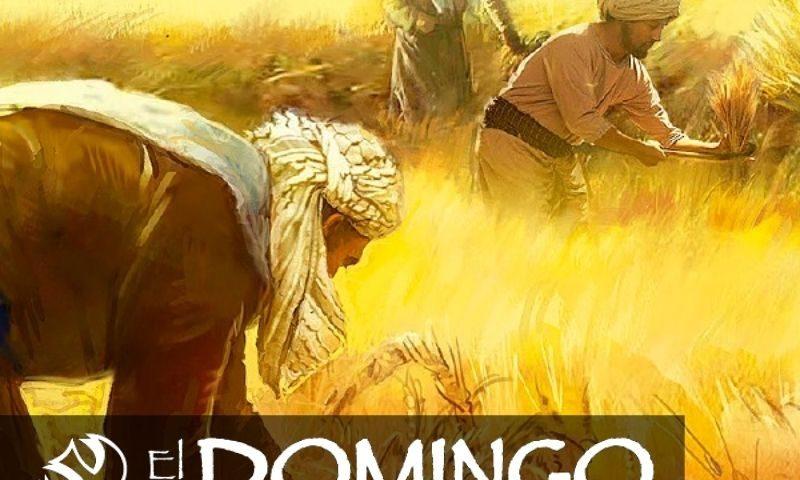 El Domingo, día del Señor: 11º durante el año